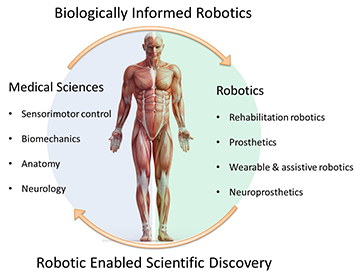 Biologically Informed Robotics